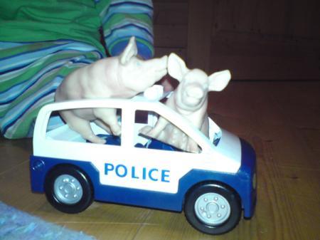 Bullenschweine?